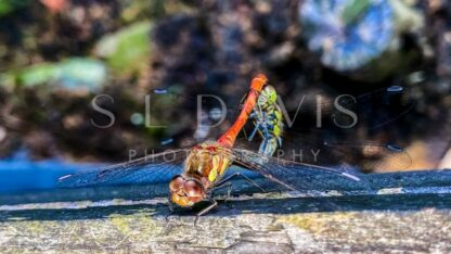 Reproduction in action - S L Davis Photography