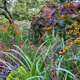 Autumnal Floral Garden - S L Davis Photography