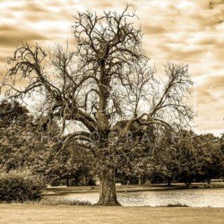 The Age Old Chestnut - S L Davis Photography