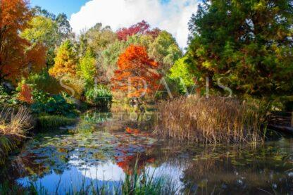 Autumn's Palette - S L Davis Photography