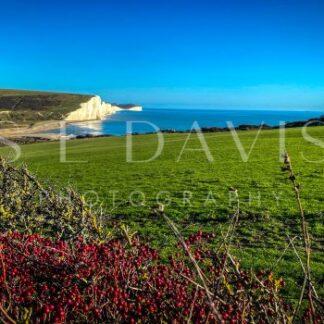 Autumn Berry Sea View - S L Davis Photography